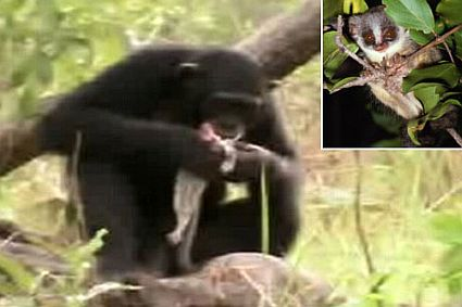 070222 chimps spears big 45