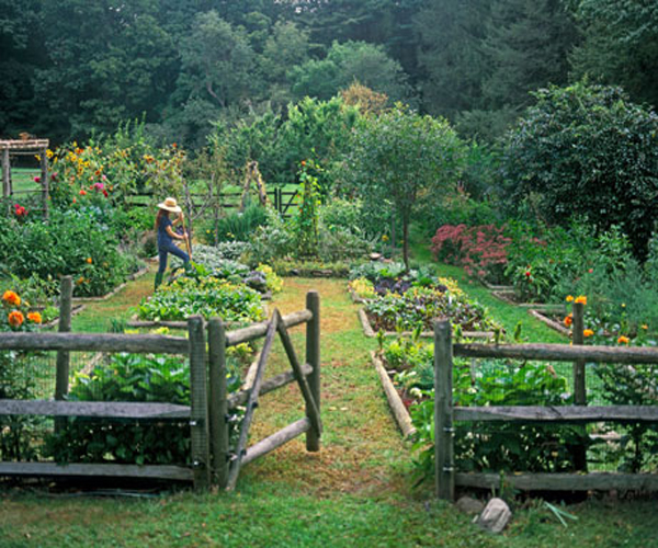 10 Tips to make your own kitchen garden | Greendiary : Greendiary ...