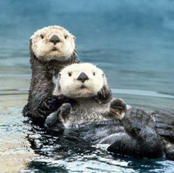 alaska sea otters declining 9