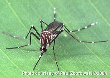 all types of dengue 9