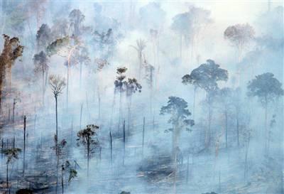 amazon engulfed in smoke