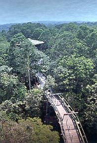 amazon jungle7
