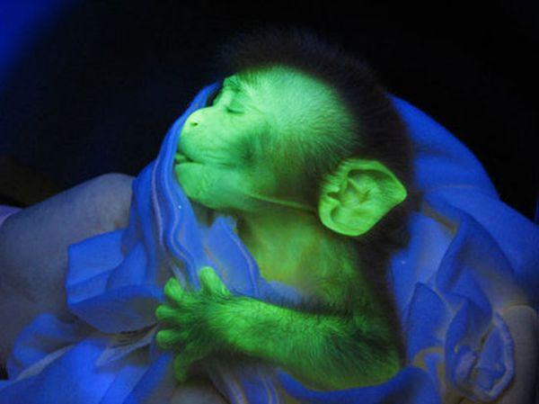 5 weirdest animals that glow in the dark - Green Diary ...