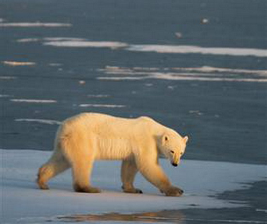arctic sea sRP5x 15921