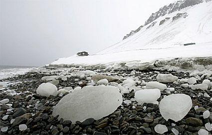 arcticx large