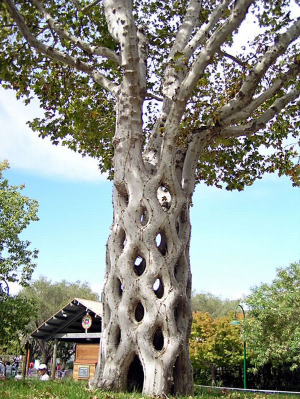 [Image: basket-tree_7jqfy_37497.jpg]