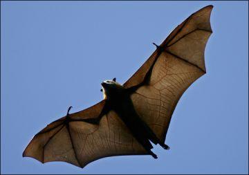 bat disappeared