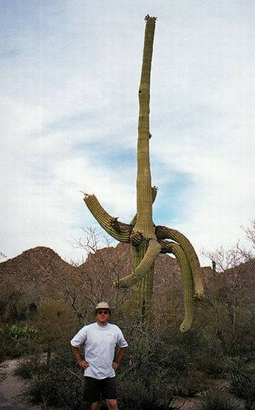 bizarre or ugly tree8