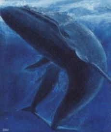 blue whales 9