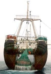 bottom trawler 9