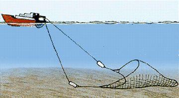 bottom trawling devastates marine ecology 9