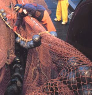 bottom trawling need to be banned 9