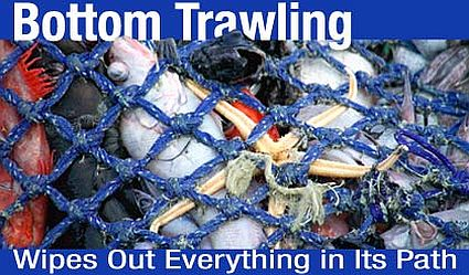bottom trawling 1449