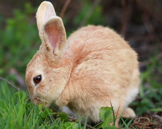 bunny for biofuel