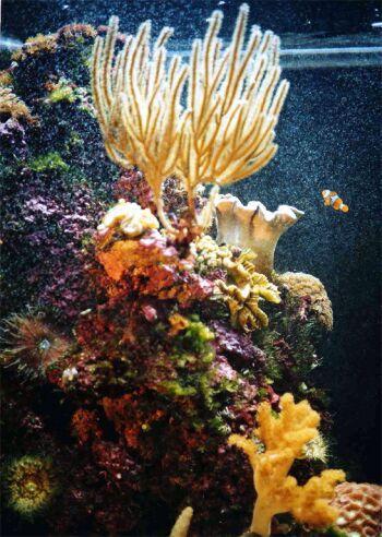 caribbean coral reefs