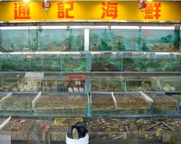 chinas live reef fish trading 9