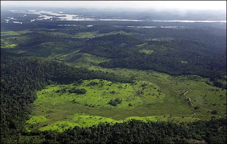 clearing of amozon forests