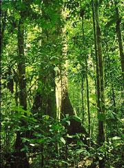 climate rain forest 65