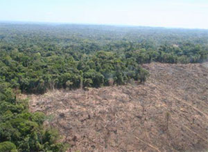 congo rainforests 246