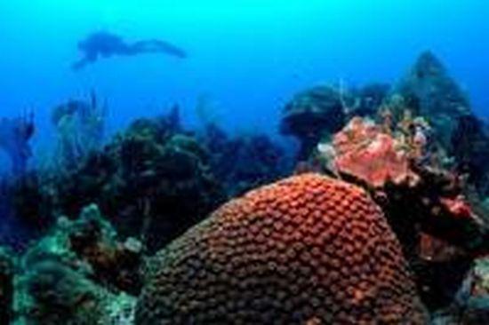 corals NoYKo 17651