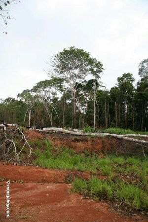deforested rainforest