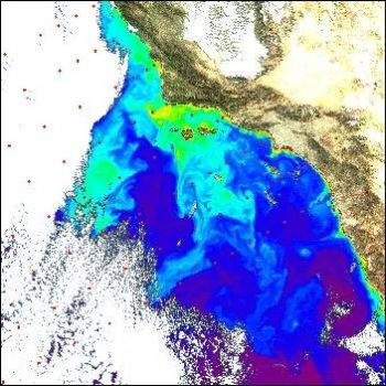 distributions of phytoplankton blooms 9