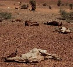 drought stricken australia 9