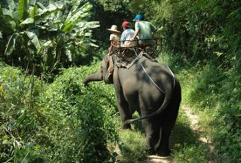 ecotourism becomes environmentallists concern 9