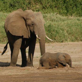elephants at samburu national reserve 9