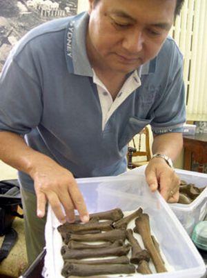 fossilised dodo birds reuters