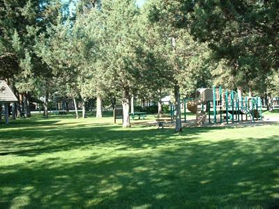 green trees 2112
