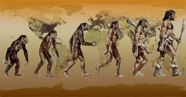 humans evolution