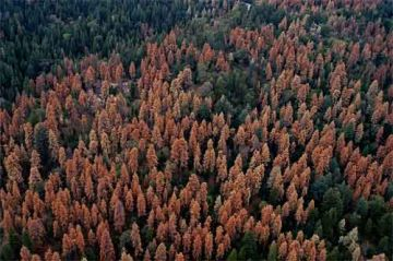 increasing demand for water is killing trees 9