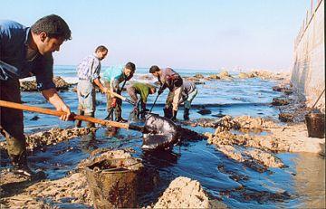 israeli attacks spawn environmental