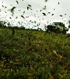 locust attack 5106