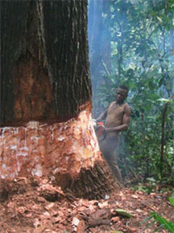 logging in congo basin 9