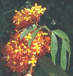 med plants 1822