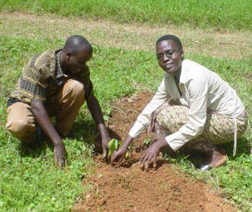 nakuru local community planting trees 9