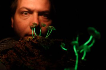 new bioluminescent mushrooms found5 9