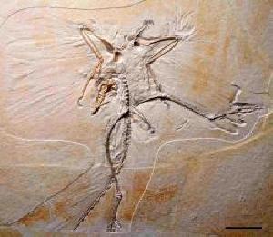 oldest bird fossil