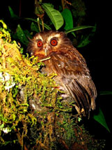 owl3 2196