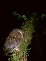 owl4 2196