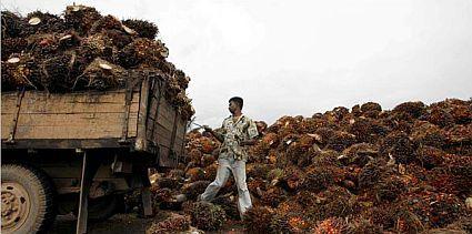 palm oil 1822
