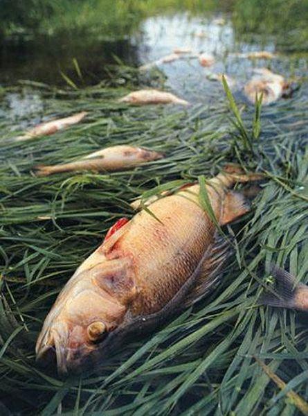 polution in lake michigan