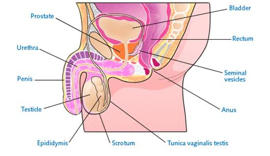 prostate cancer MQ3yY 2263