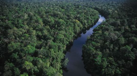 rain forests disappearing fast