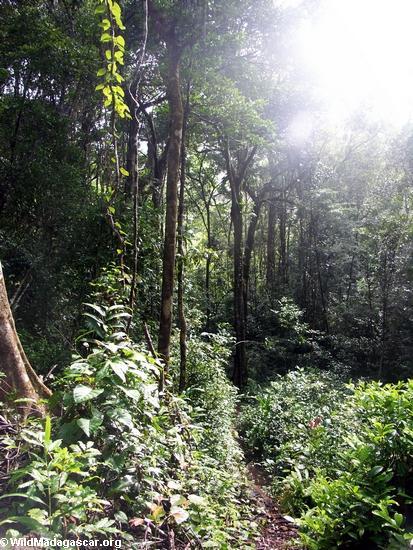 rainforest of madagasca246