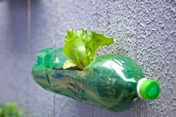 http://www.greendiary.com/wp-content/uploads/2012/07/recycled_plastic_bottle_gardening_2f55b.jpg
