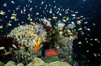 rich marine reserve off papua coast