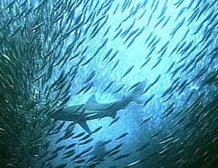 seafood extinction 64